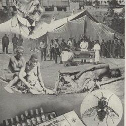 "New Publication from Sarah Ehlers: ""Globale Krankheiten"" (Global Illness)"